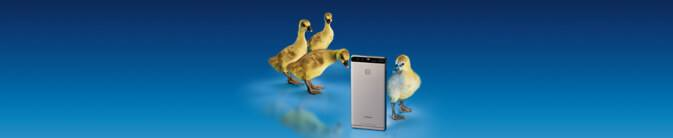 network-coverage-goslings_673x138px_130217