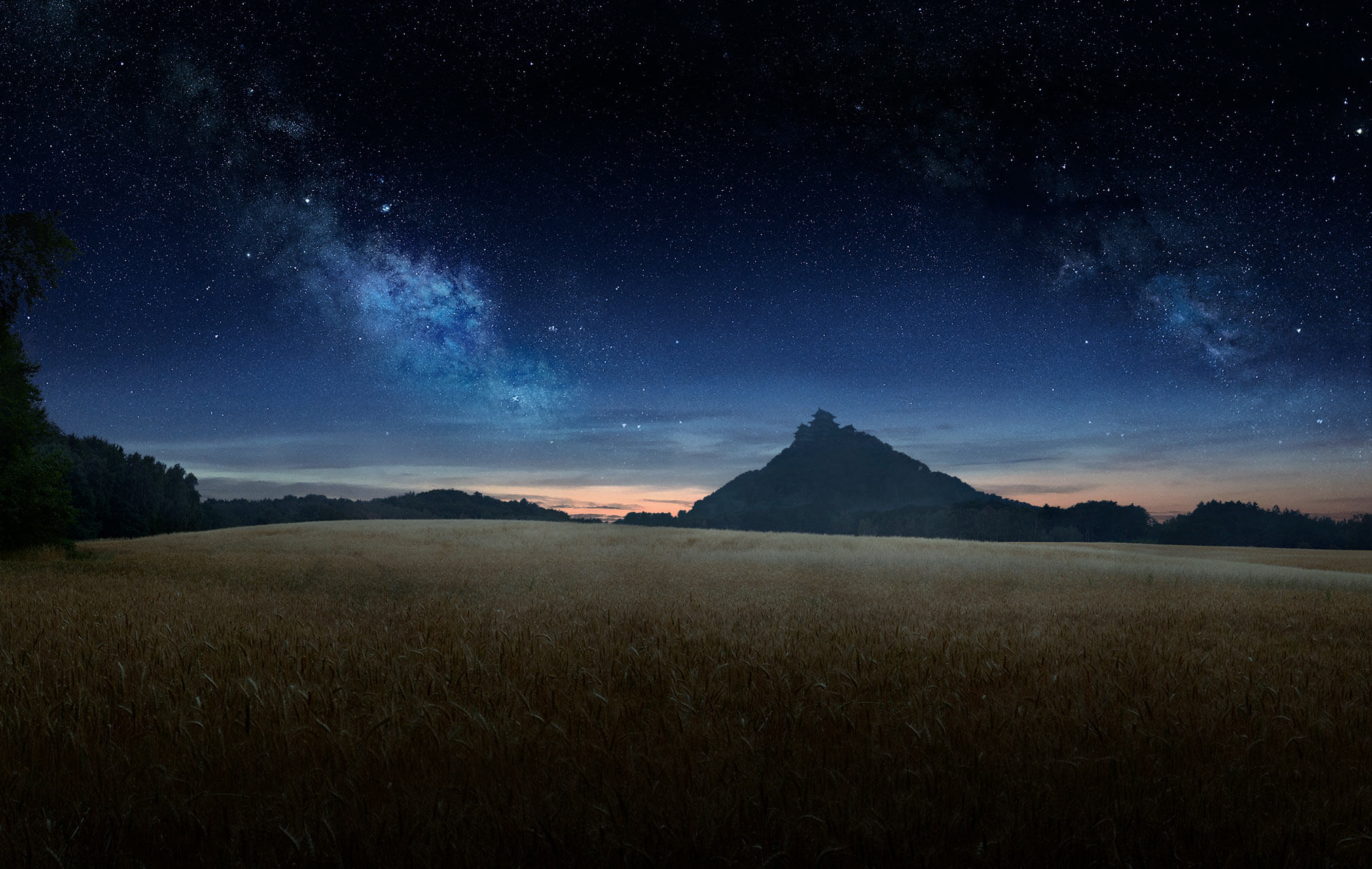 Field of wheat at night